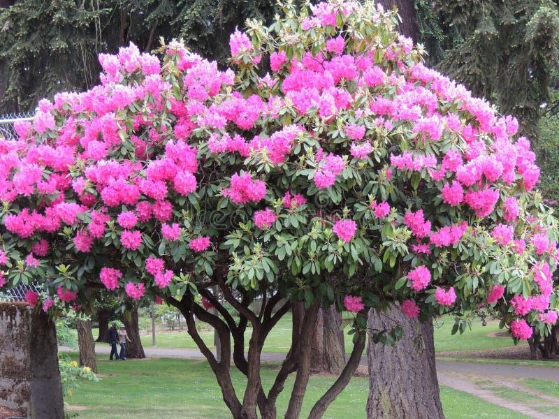 Doorboor bloemboom royalty-vrije stock foto's