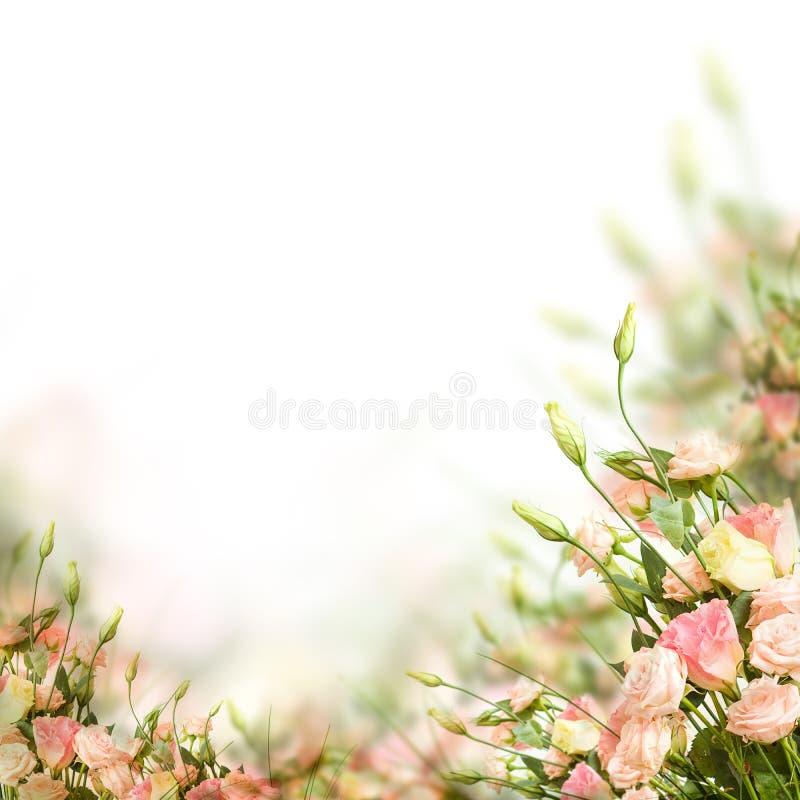Doorboor bloemengrens Bloemen op achtergrond stock afbeelding