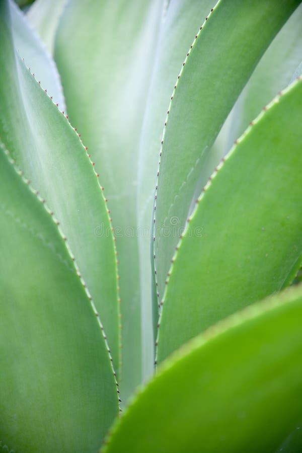 Doorn succulents stock foto's