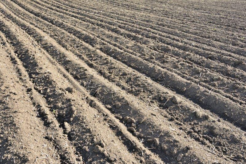 Doorploegt rijpatroon op een geploegd gebied dat op het planten van gewassen in de lente wordt voorbereid Horizontale mening in p royalty-vrije stock foto's