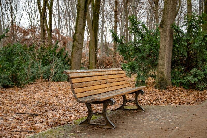 Doorstane houten plankenbank in Tiergarten-park van Berlin Germany Dalingslandschap met niemand en lege bank omringd met bomen royalty-vrije stock afbeeldingen