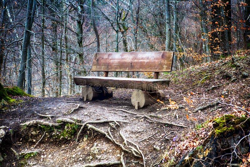 Doorstane oude houten bank in het bos stock afbeeldingen