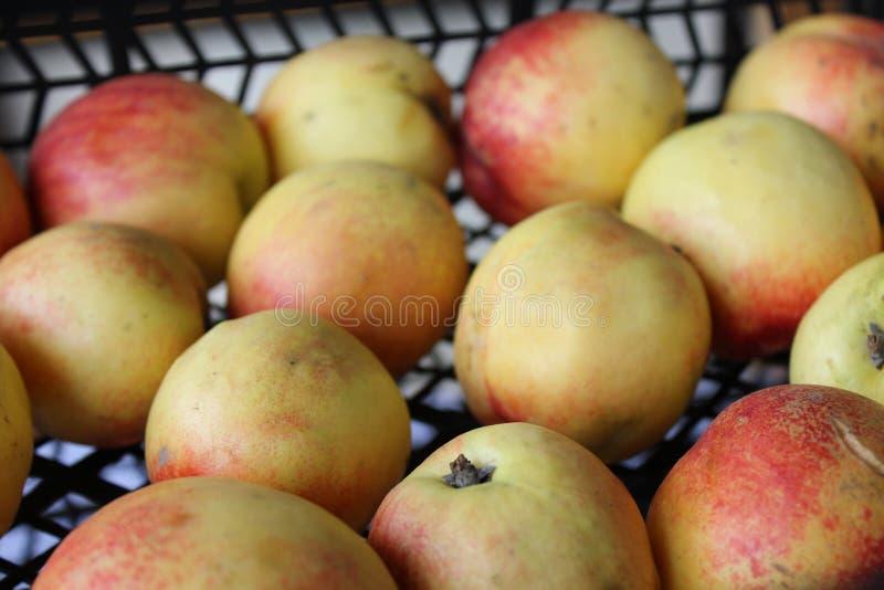 Doos van nectarines bij markt 20390 worden aangeboden die royalty-vrije stock foto