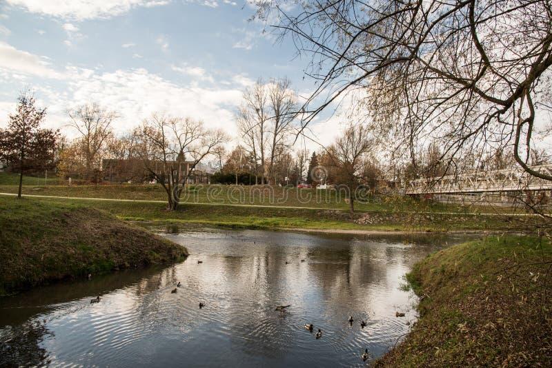 Dopływ Lucina i Ostravice rzeki blisko Slezskoostravsky hrad roszuje w Ostrava mieście w republika czech podczas jesień dnia fotografia stock