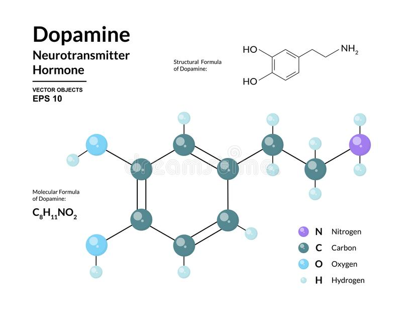Dopaminehormon neurotransmitter Strukturell kemisk molekylär formel och modell 3d Atomer föreställs som sfärer vektor illustrationer