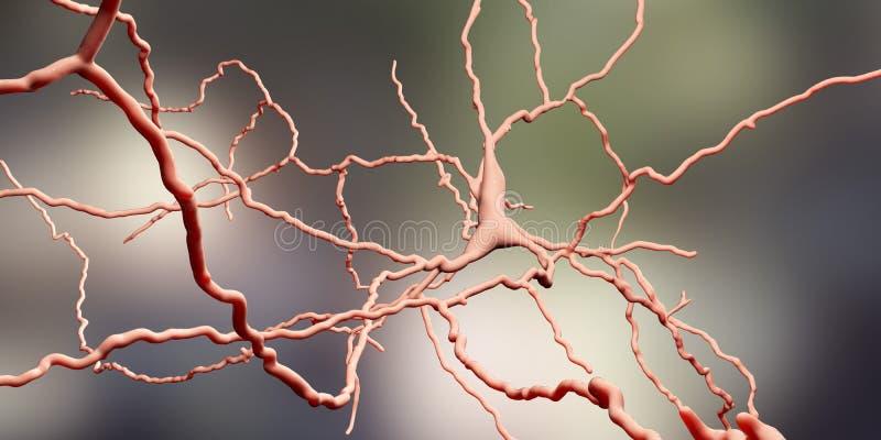 Dopaminergic neuron De degeneratie van deze hersenencellen is de oorzaak van ontwikkeling van de ziekte van Parkinson ` s royalty-vrije illustratie