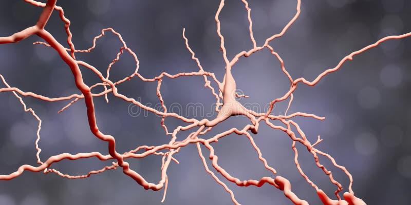 Dopaminergic neuron Försämring av celler för denna hjärna är ansvarig för utveckling av sjukdomen för Parkinson ` s vektor illustrationer