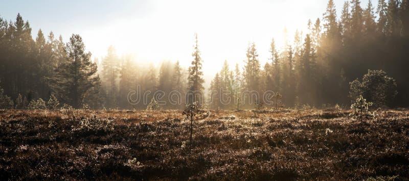 Dopheide en bos in mist wordt gehuld die stock afbeelding