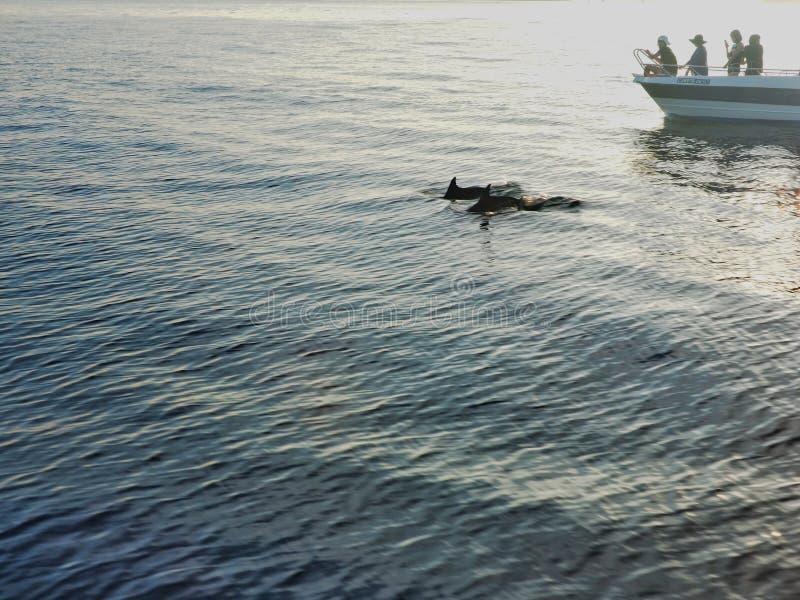 dophin arkivfoto