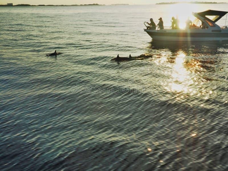 dophin royaltyfria foton