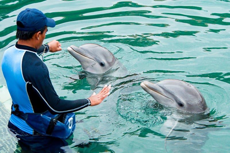 Doplhin hielt in der Gefangenschaft im Park Puerto Aventuras in Mexiko, Yucatan stockbild
