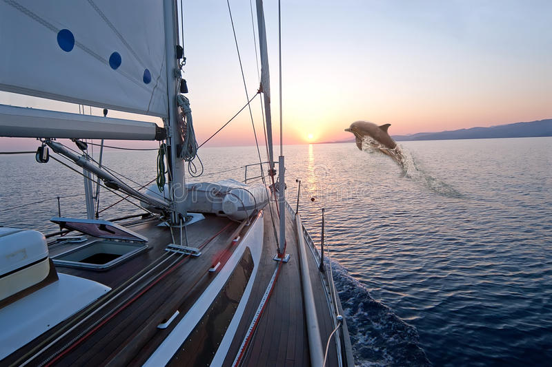 Doplhin jumping near sailing boat. At sunrise stock image