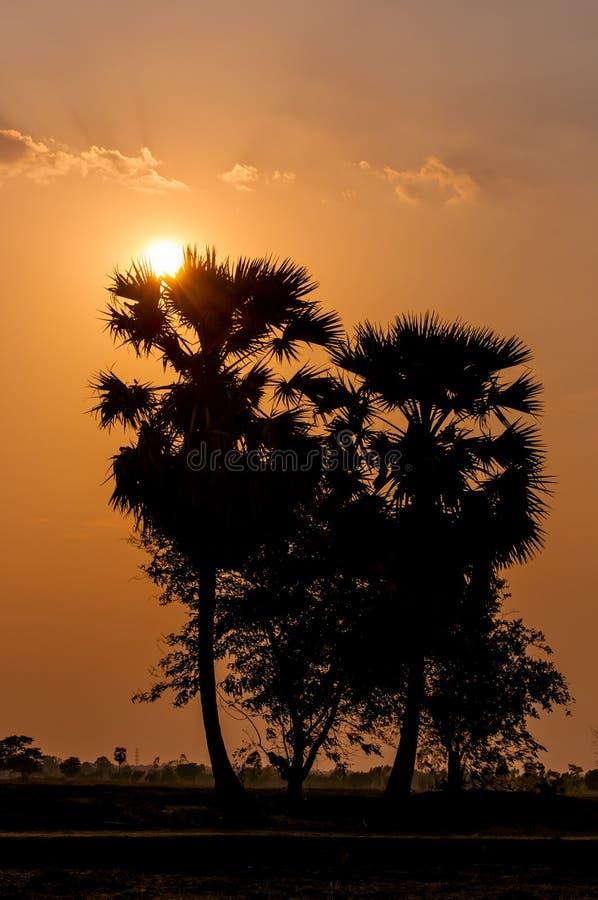 Dopo il tramonto, palma fotografia stock libera da diritti