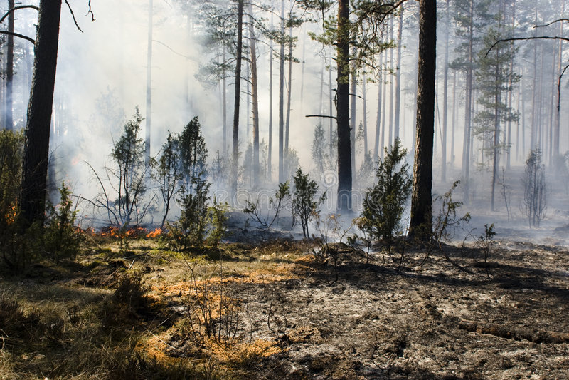 Dopo l'incendio violento in foresta fotografie stock libere da diritti