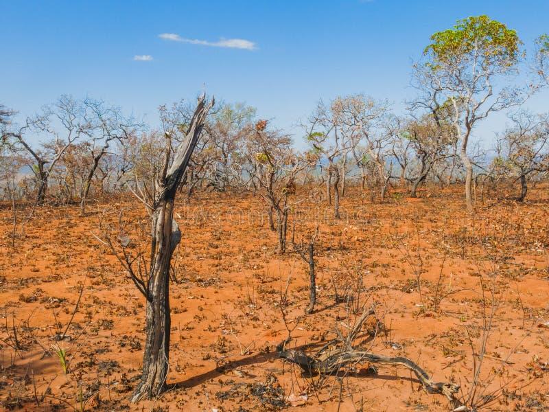 Dopo l'incendio violento nella savanna brasiliana fotografia stock