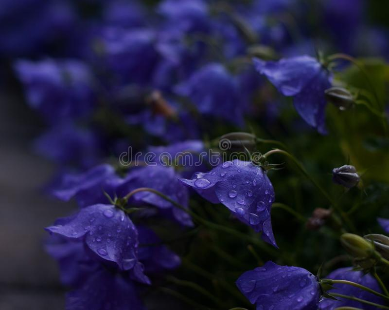 Dopo la pioggia di estate fotografie stock