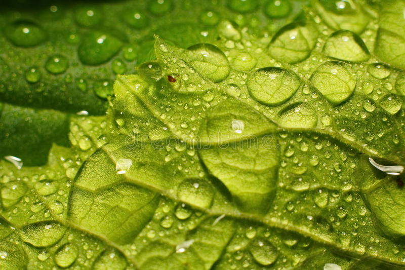 Dopo una pioggia di estate macro foto delle gocce di acqua (rugiada) sui gambi e sulle foglie delle piante verdi fotografia stock
