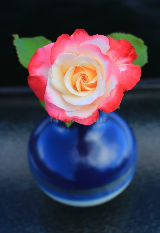 Doppelte Freude Rose in einem blauen Vase lizenzfreies stockfoto