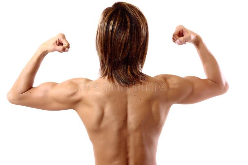 Doppelter zweiköpfiger Muskel von hinten stockbilder