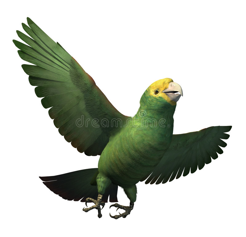 Doppeltes Gelb-Ging Amazonas-Papageien voran stock abbildung