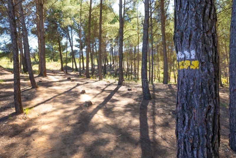Doppeltes Streifenzeichen gemalt auf Baum, um einer Spur für Trekking oder das ländliche Radfahren auf einen Wald in Spanien zu s stockbild