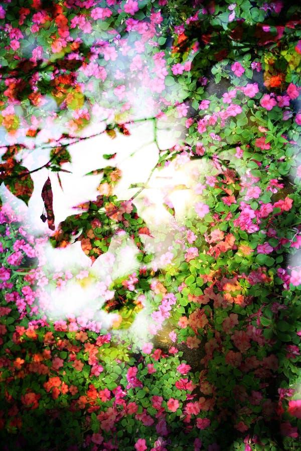Doppia esposizione degli oggetti floreali immagine stock libera da diritti