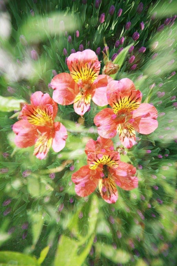 Doppia esposizione degli oggetti floreali fotografie stock