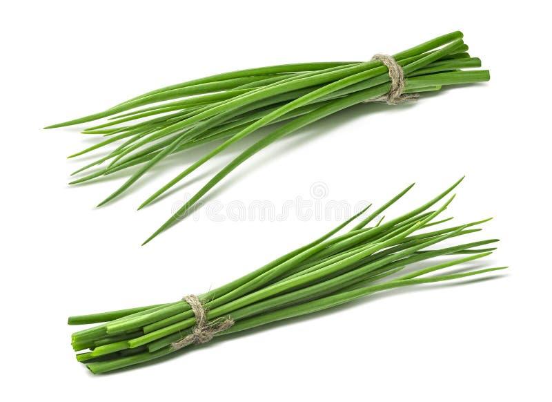 Doppio verde del mazzo della cipolla di inverno della cipolla di inverno isolato fotografia stock