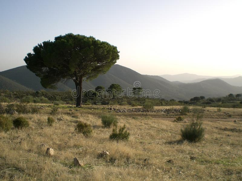 Dor Platteland buiten Madrid, Spanje stock afbeeldingen
