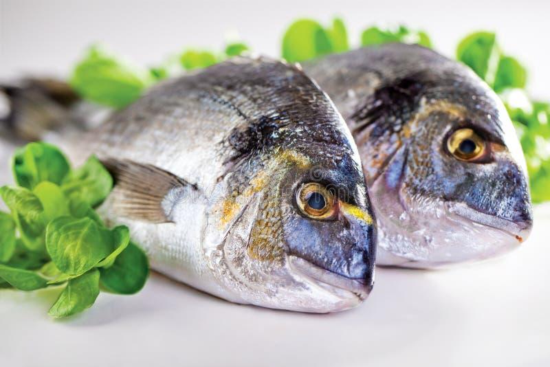 Download Dorada stock image. Image of head, plate, seafood, healthy - 14861813
