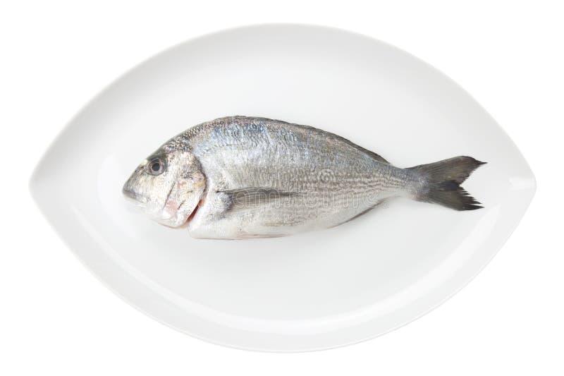Dorada essbare Meerestiere auf einem weißen ovalen Teller. Brachsenfische. stockbild