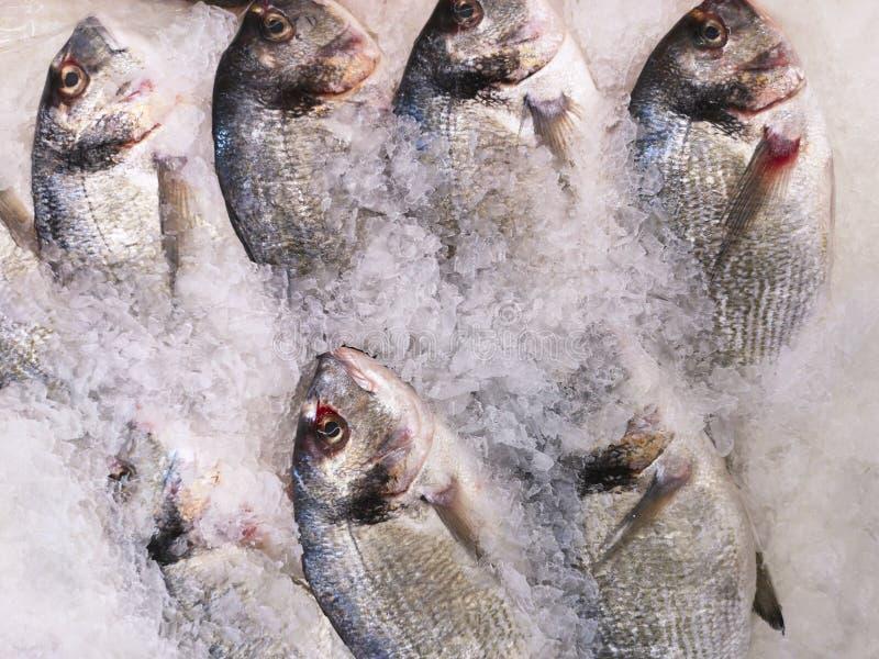 Dorada på is på det havs- båset Horisontalbästa sikt av en doradafisk på en istabell på marknaden royaltyfria foton