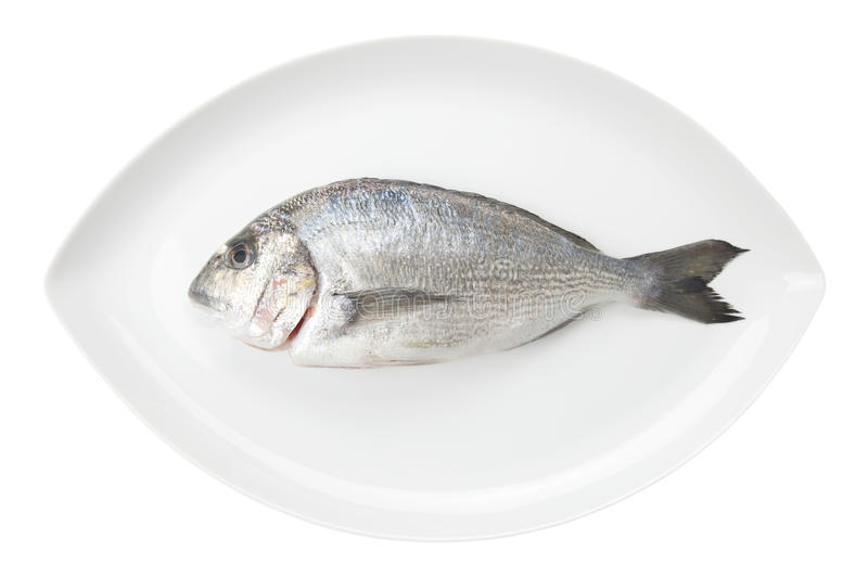 Dorada seafood on a white oval dish. Bream fish. stock image