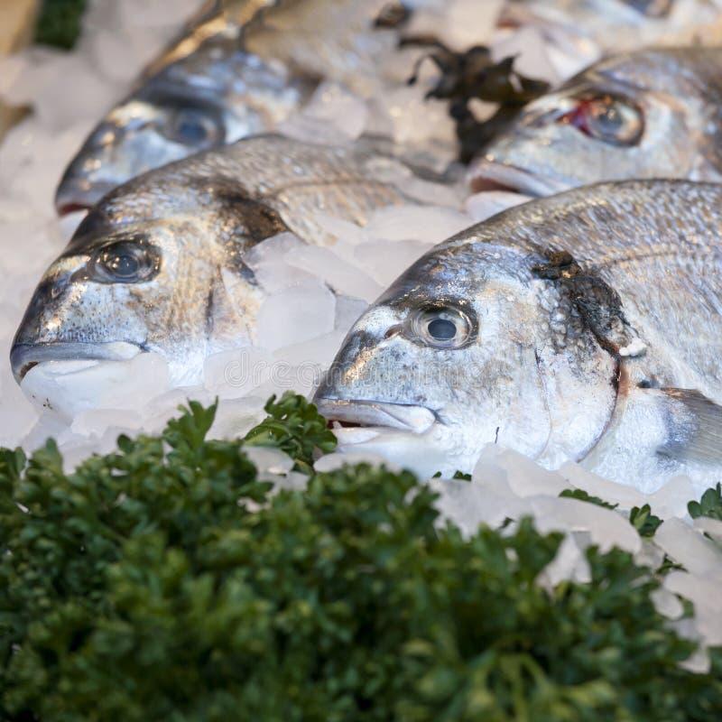 Dorade no mercado de peixes, fotografia de stock