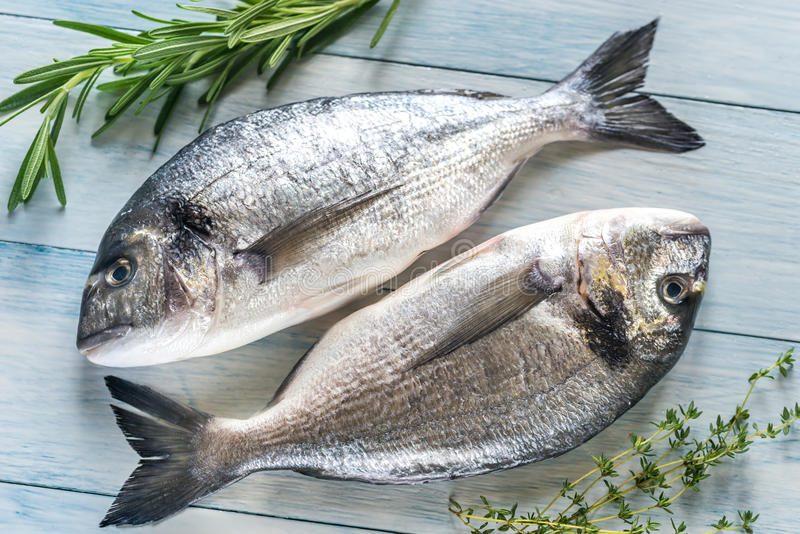 Dorade Royale Fish. On the wooden background royalty free stock photo