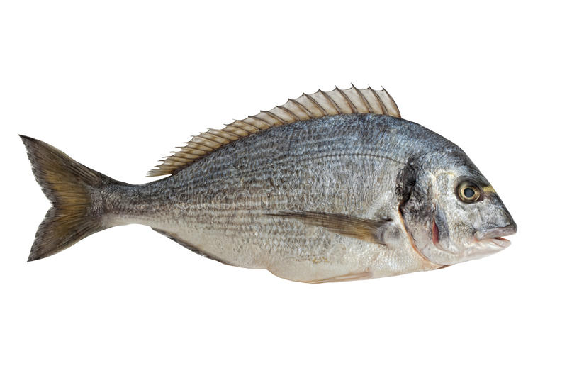 dorado鱼 免版税库存图片