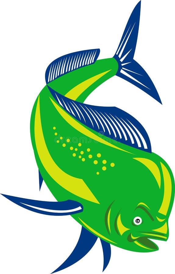 Dorado dolphin fish. Illustration of a Dorado dolphin fish on white background stock illustration
