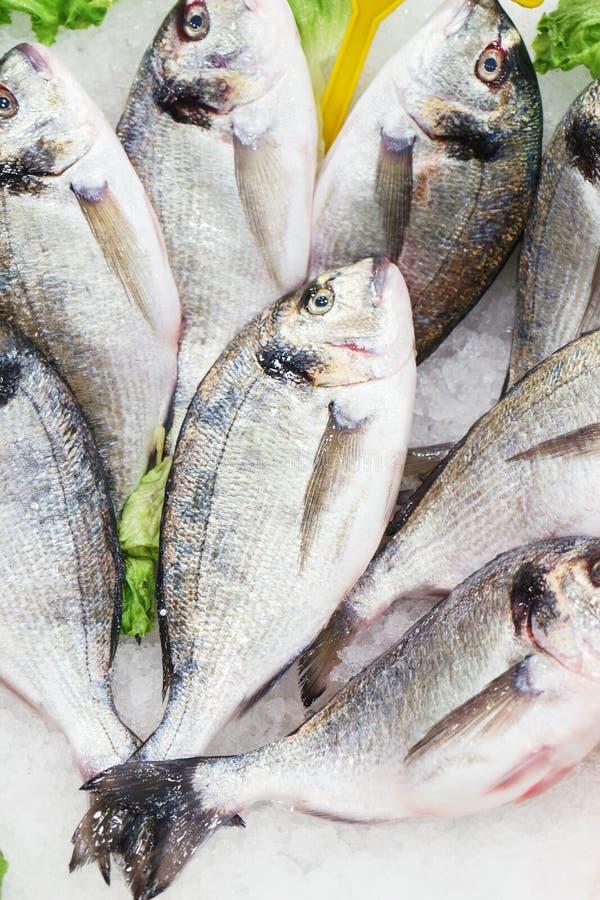 Dorado effrayant frais de poissons de fruits de mer sur la glace au compteur de poissonnerie photos stock