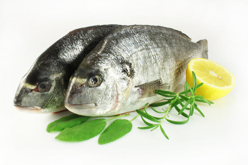 Dorado fish. With sage, rosemary and lemon royalty free stock photos