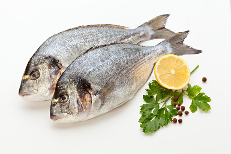 Dorado fish stock image