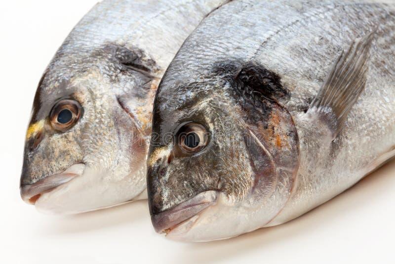 Download Dorado fish stock photo. Image of industry, gilthead - 29085776