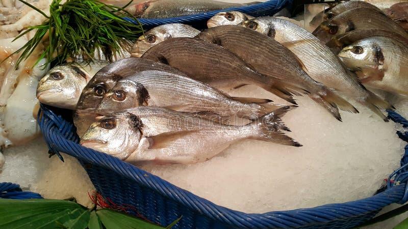 Dorado fish for sale at the market. Dorado fish on ice for sale at the market royalty free stock image