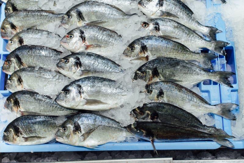 Dorado fish on ice tray. Closeup view royalty free stock photography