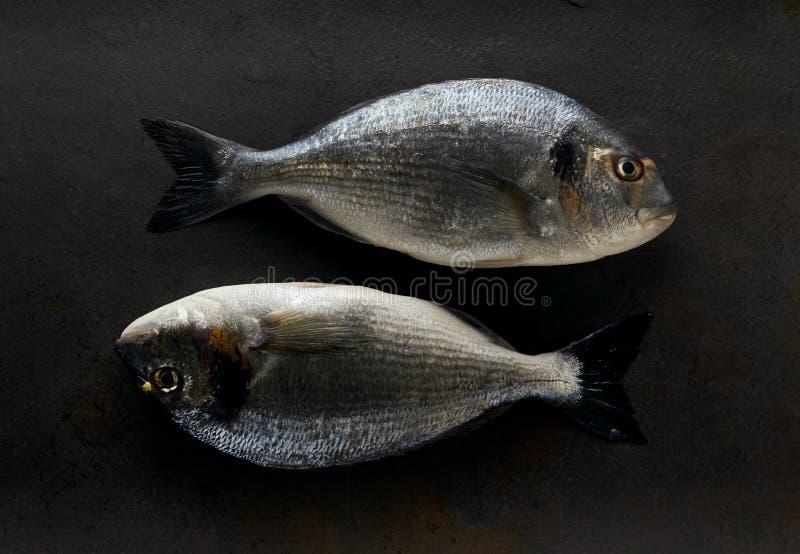 Dorado fish on the stone. Two dorado fish on the black stone stock photos