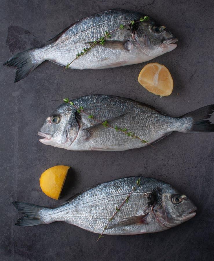 Dorado fresco del pesce di mare con le ostriche e gamberetto e verdure fotografia stock libera da diritti