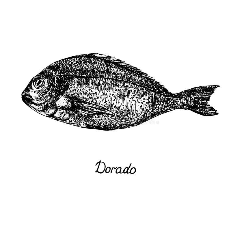 Dorado, mahi-mahi or common dolphinfish Coryphaena hippurus with inscription, hand drawn doodle sketch, isolated vector outline. Illustration royalty free illustration