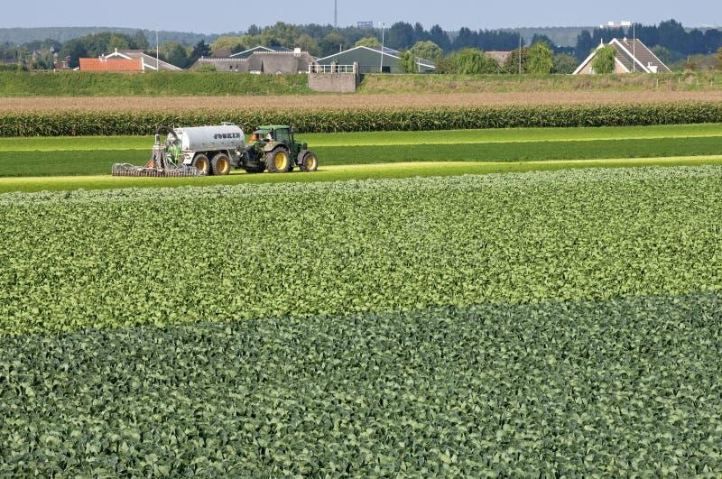 Dorfansicht mit Kohlfeld und einspritzen Landwirt lizenzfreie stockbilder