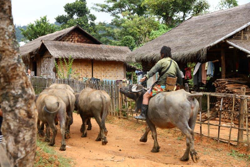 Dorfbewohner fährt Wasserbüffel stockbild