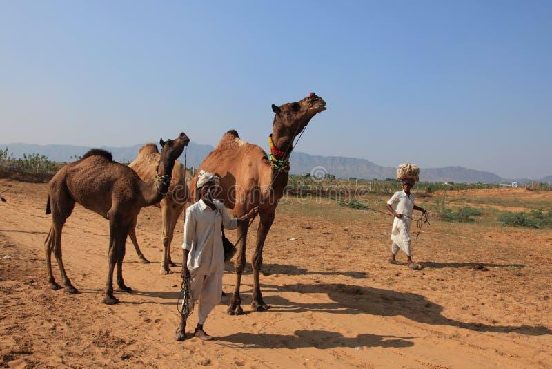 Dorfbewohner mit seinem Kamel nehmen an Pushkar ehrlich teil stockbild