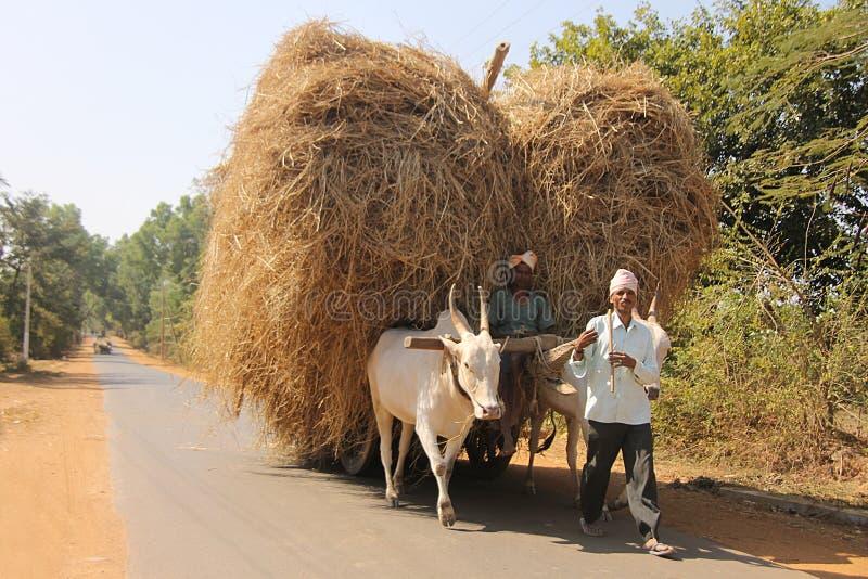 Dorfmann mit zwei Indern auf Ochsenkarren stockbilder